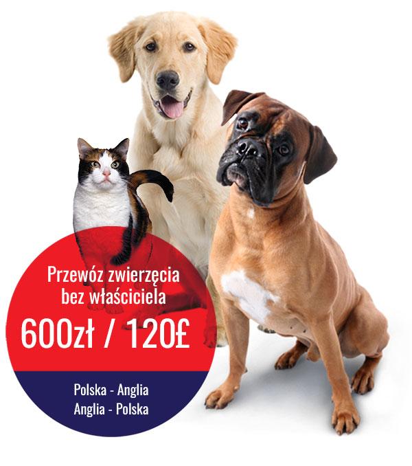 przewóz zwierząt Polska-Anglia
